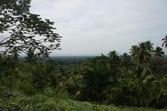 02 - Jungle near Samana / Dschungel in Samana