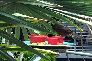 Neighborhood Days - California Academy of Sciences Biosphere bird
