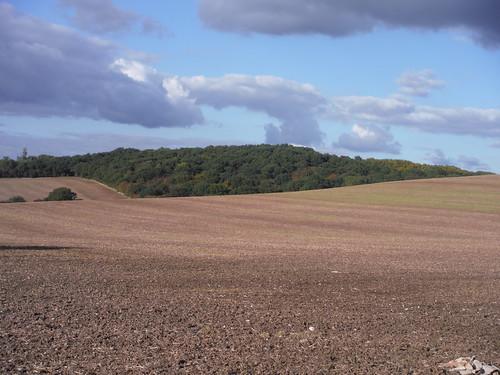 Lincewood across field