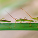Macro Mondays - All in a row - Insects by rachelsloman
