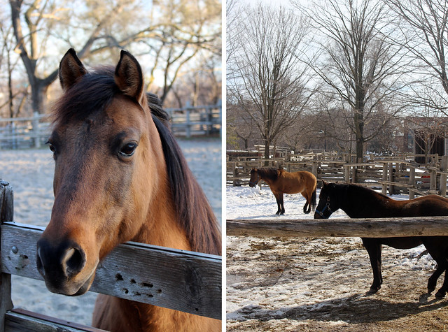 Riverdale Farm Horses