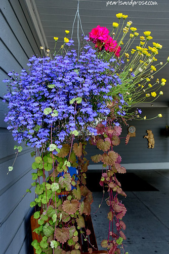 fairbanks_lobelia_web