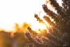 Sunset impression by lukaslittle