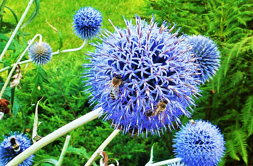 Blue flowers & bees