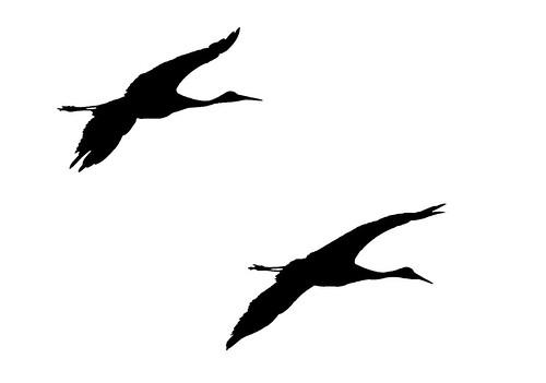 bird mi fly crane body head michigan wildlife flight wing national sandhill refuge sandhillcrane nationalwildliferefuge seney 2015 gruscanadensis seneynationalwildliferefuge