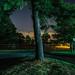 Tree Near Wagaraw Road, Hawthorne NJ by frperdurabo