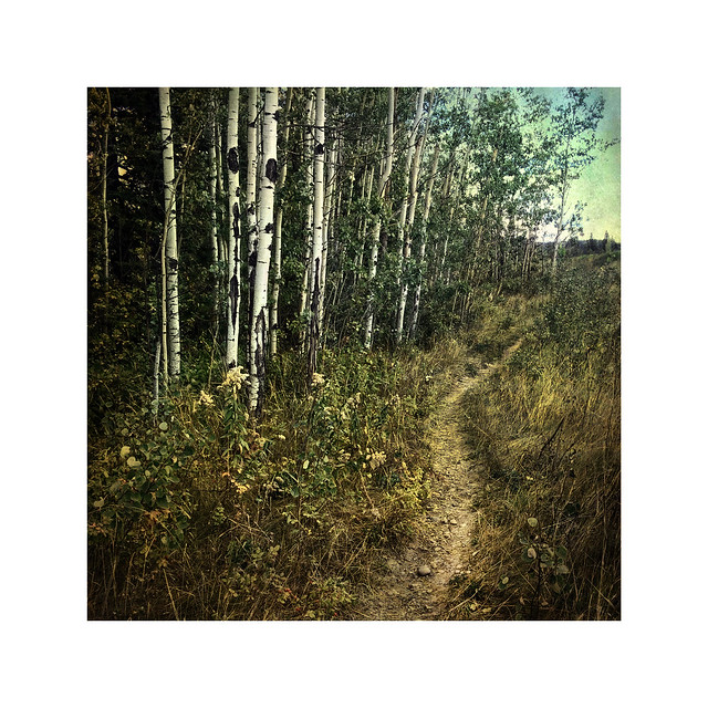 Pines Path