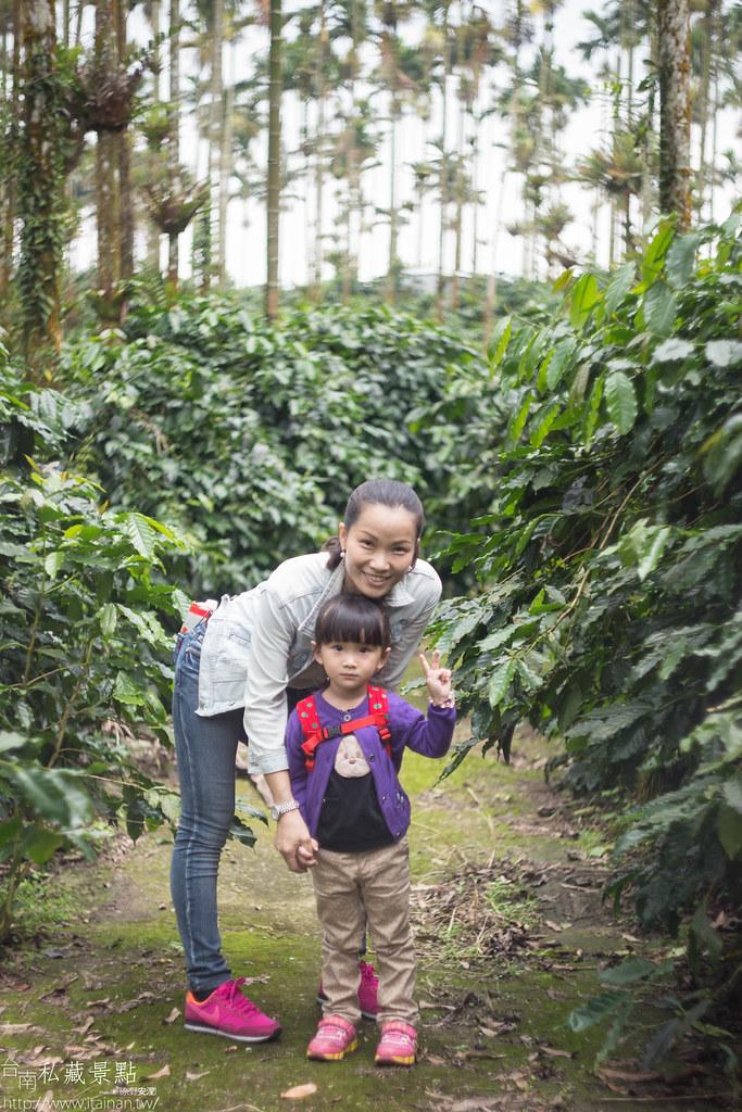村長咖啡-天池咖啡步道 (22)