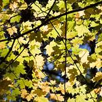 Fall in green