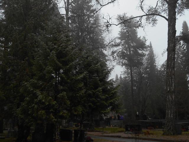 Tihkusadepisaroiden hopeoittamaa kanadantuijaa (Thuja occidentalis), 8.11.2015 Hämeenlinna Ahveniston hautausmaa