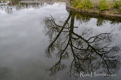 Tree reflection in the Mississippi River in Almonte, Ontario.