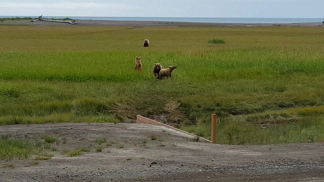 Mama & second-year cubs meet up with another aggressor bear that frightens the cubs away