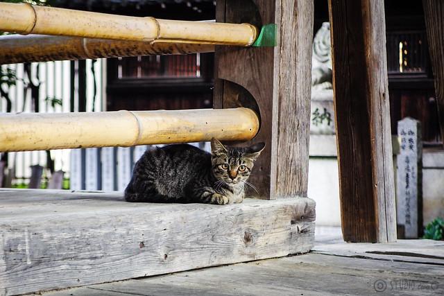 Today's Cat@2015-09-08
