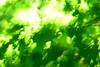 Green explosion