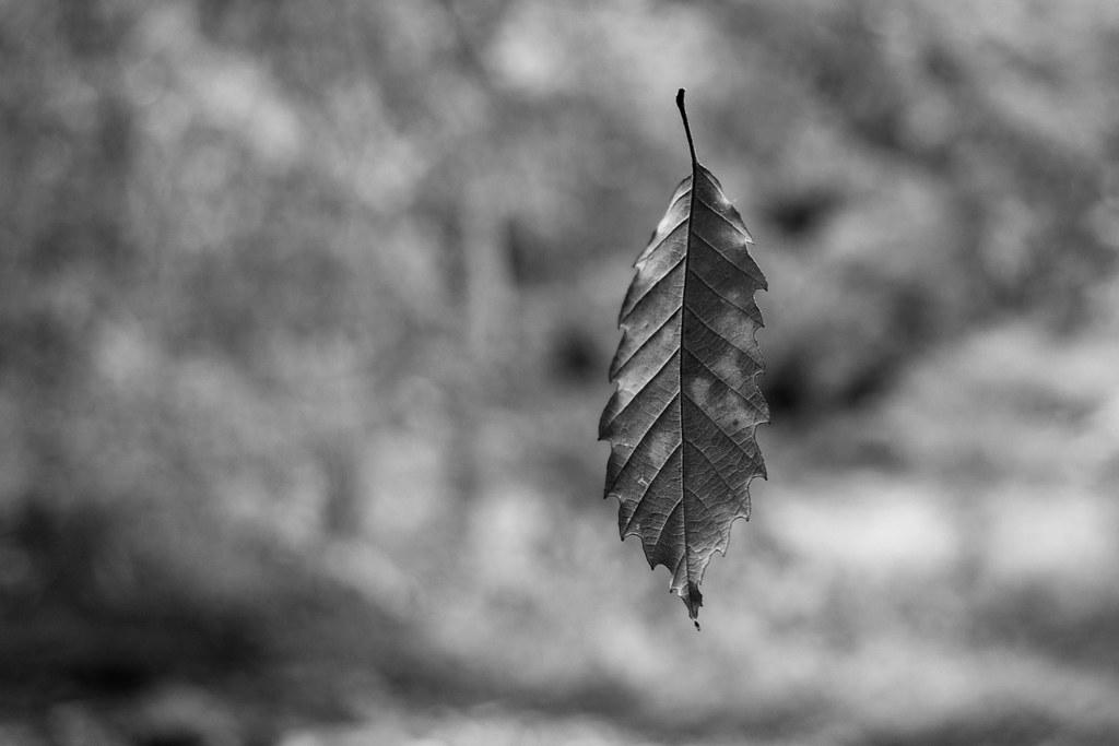 Suspended Leaf 2