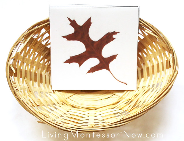 Fall Leaves Memory Game