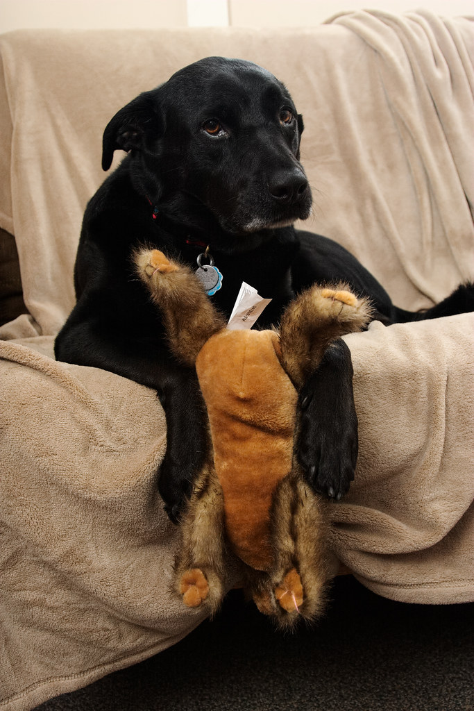 Our dog Ellie with her stuffed rabbit toy