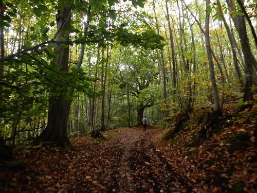Mereworth Woods
