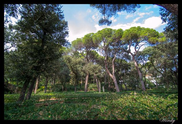 Jardín de los musgos y pequeño laberinto