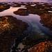 """alien landscape from above by Scott Stringham """"Rustling Leaf Design"""""""