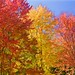 Peak Autumn Foliage by flythebirdpath > > >