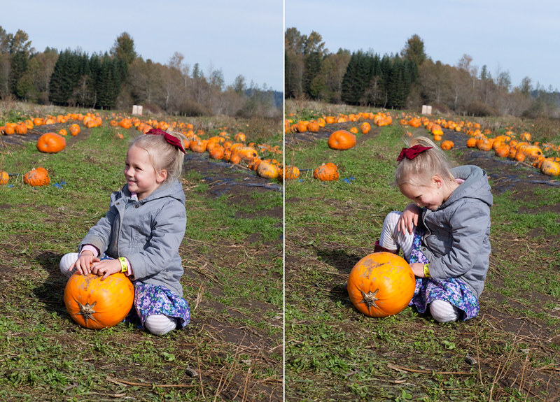 PumpkinPatch2015-11
