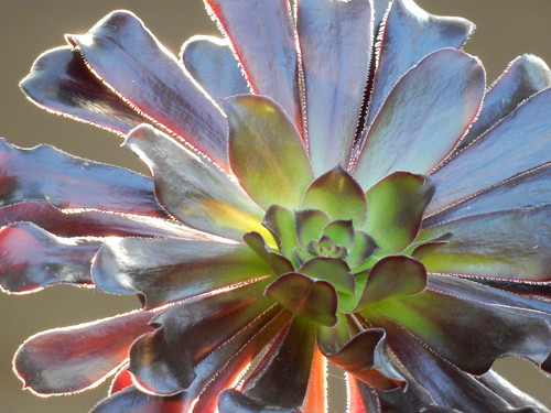 San Diego Zoo - flora