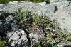 Joffre Lakes weekend..  Mount Taylor trail.. by iwona_kellie