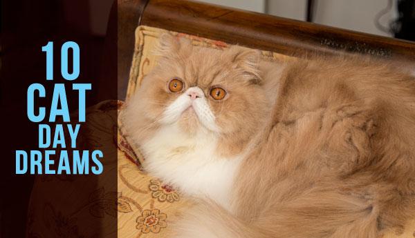 10-cat-day-dreams