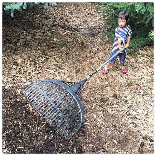 Big Rake. #family #Michigan #yardwork