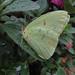 asleep on a leaf by mimbrava