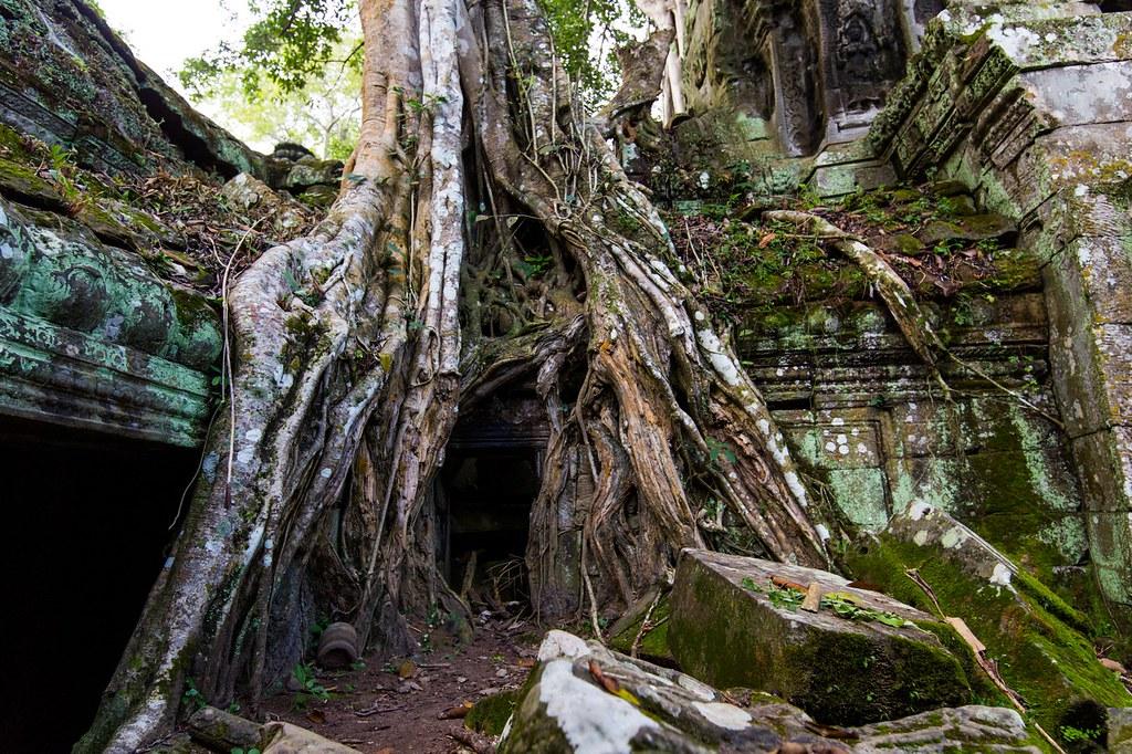 Ta Prohm Angkor-2809