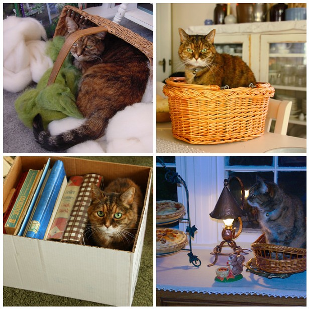 Mollie in baskets/boxes