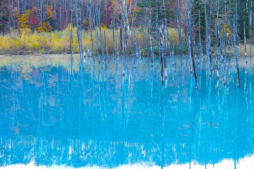 紅葉の青い池
