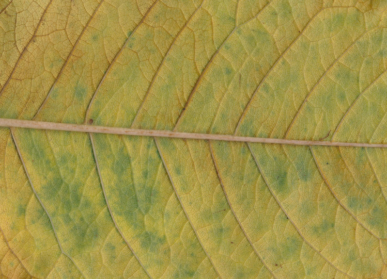 CreativeCommons - Autumn leaves - 2015 Series 1 - 06 by #TexturePalace