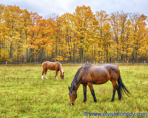 Horses in an Autumn Rain
