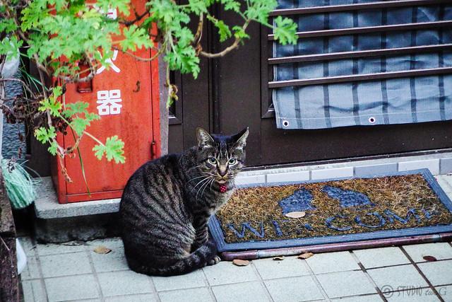 Today's Cat@2015-11-22