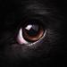 Me in Rocky's eye. by zeon7