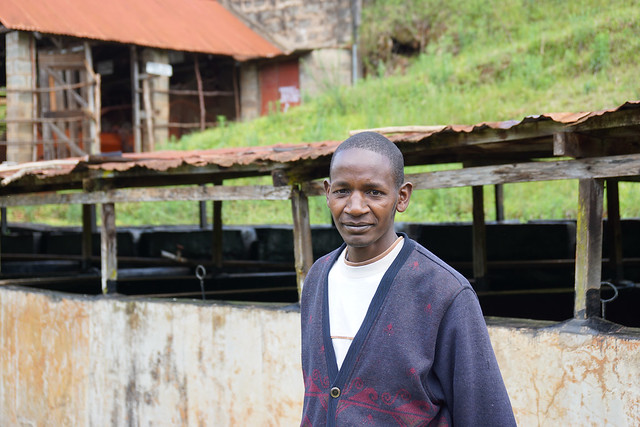 Ephraim Maina Muthee - Karogoto factory manager