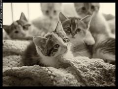 kitten pile 1