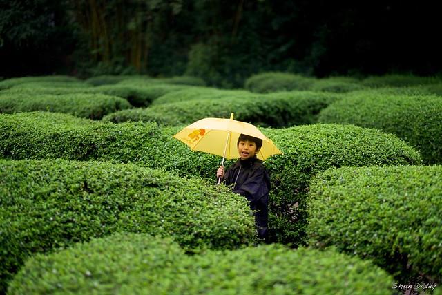Umbrella in maze
