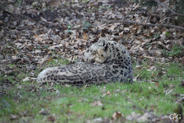 Besuch Zoo Rostock 30.12.2015123