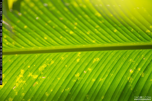 green nature leaf ecuador bokeh