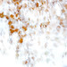 Das Flüstern im Wind by flowerpics09