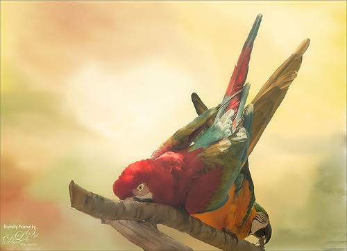 Image of two macaws