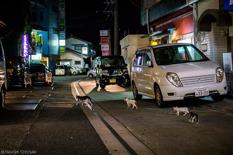 Tokushima Cat Color #238