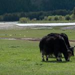 Animales mongoles