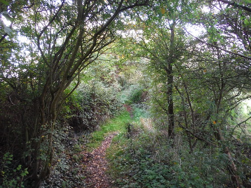 Path up to Langdon Hill
