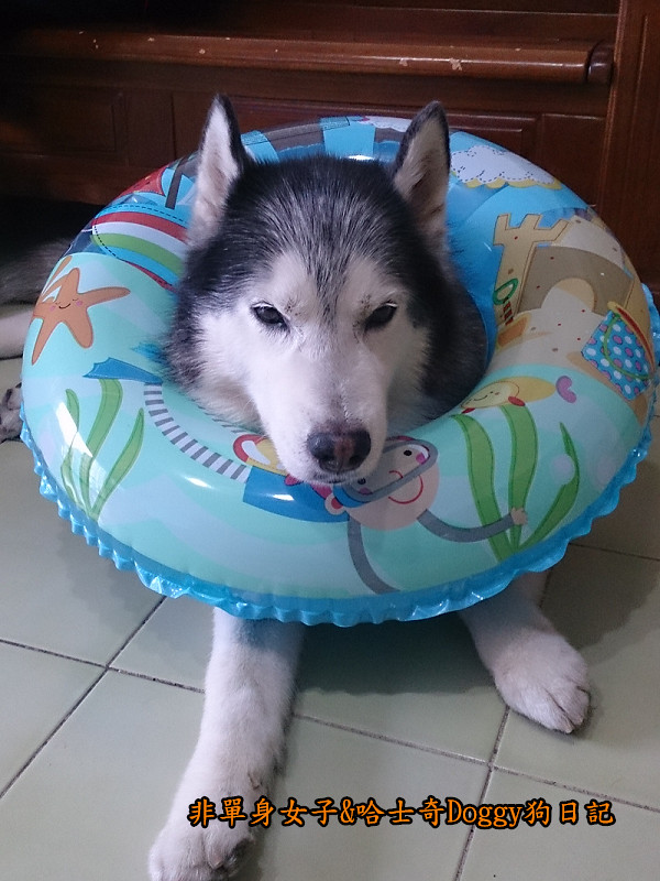 Doggy颱風09