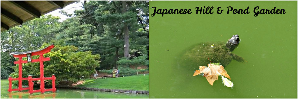 Japanese Hill Pond -edit